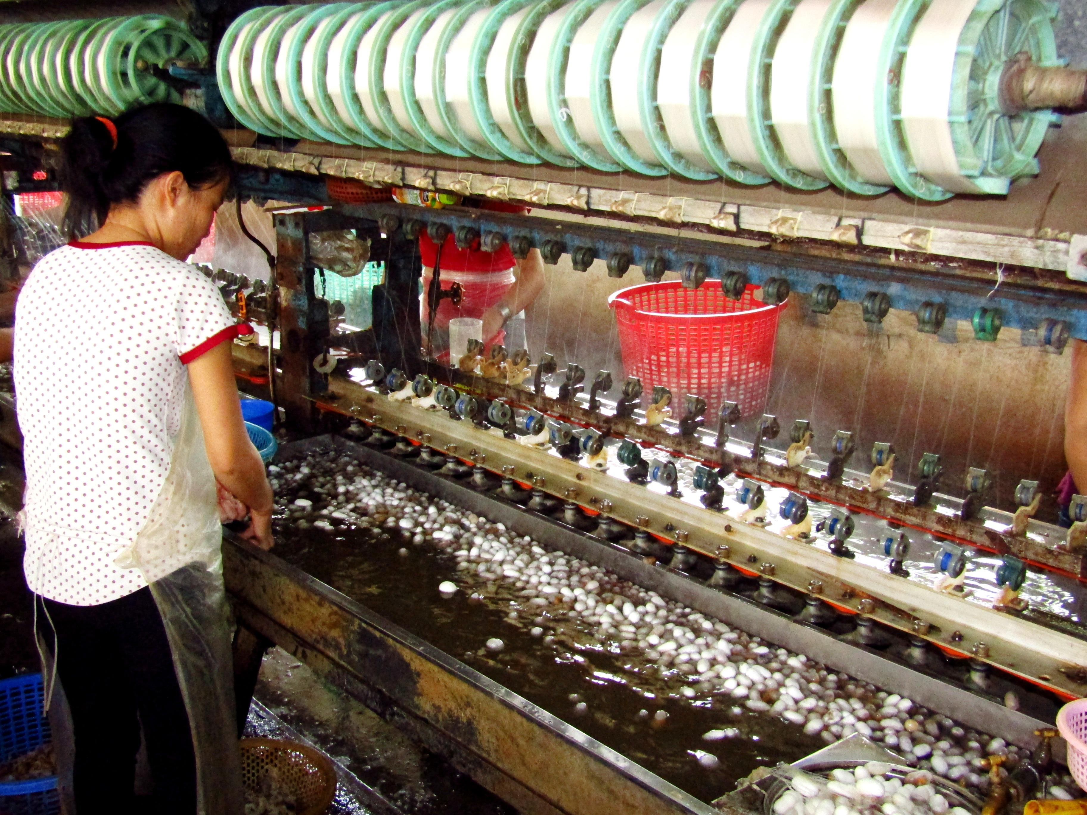 Silk Production Plant