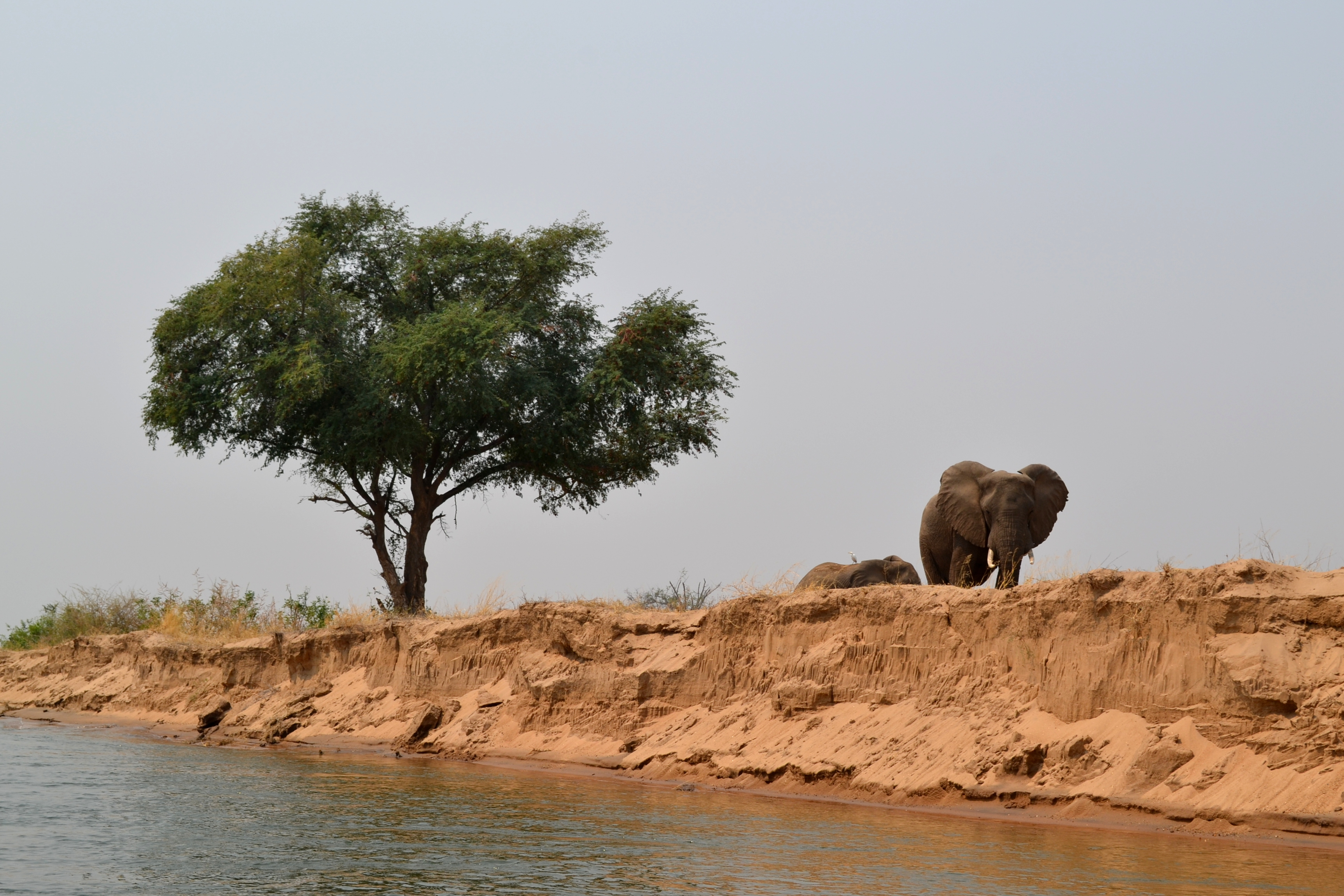 Elephants on the Zimbabwean river bank
